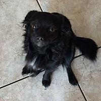 Adopt A Pet :: ASAP - Pasadena, CA
