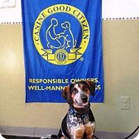 Beagle/Hound (Unknown Type) Mix Dog for adoption in Tucson, Arizona - Skylar