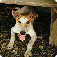 Adopt A Pet :: Bashful - Denver, CO