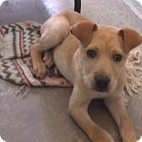 Adopt A Pet :: Ranger - Orangeburg, SC