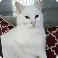 Adopt A Pet :: Bliss - Henderson, KY