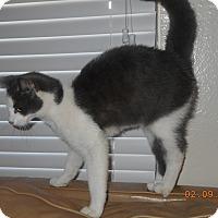 Adopt A Pet :: D'andre - haslet, TX
