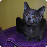 Adopt A Pet :: Molly - Bay City, MI