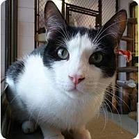 Adopt A Pet :: Moo-Moo - Grayslake, IL