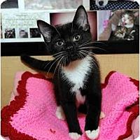 Adopt A Pet :: Rocco - Farmingdale, NY