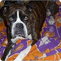 Adopt A Pet :: Sadie - Albany, GA
