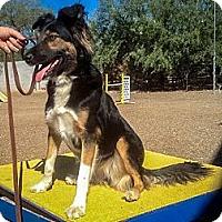 Adopt A Pet :: Fiona - Tempe, AZ