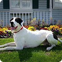 Adopt A Pet :: Hercules - Virginia Beach, VA