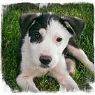 Adopt A Pet :: Happy ~B Sweetest girl!