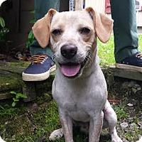 Adopt A Pet :: Speck - Cashiers, NC