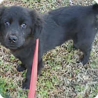 Adopt A Pet :: Wimpy Skimpy - coming soon! - Harmony, Glocester, RI