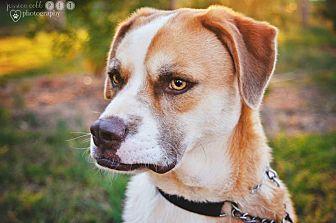 Boxer Mix Dog for adoption in Barnesville, Georgia - Blaze