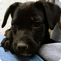Adopt A Pet :: Hops Pup - Citra - Adopted! - San Diego, CA