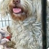 Adopt A Pet :: Benji - Boulder, CO