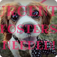 Adopt A Pet :: URGENT! FOSTERS NEEDED! - Thorp, WI