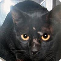 Adopt A Pet :: 298313 - Wildomar, CA