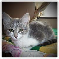 Adopt A Pet :: ROAN - Medford, WI