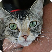 Adopt A Pet :: Sylvia - Ocean Springs, MS