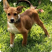 Adopt A Pet :: Lane - Windham, NH