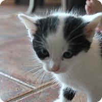 Adopt A Pet :: Scarlett - Louisville, KY