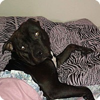 Adopt A Pet :: Ziggy (urgent) - Northumberland, ON