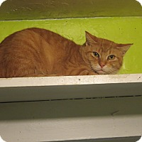 Domestic Shorthair Cat for adoption in Coos Bay, Oregon - Keegan