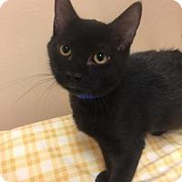 Adopt A Pet :: Boomer - Cumming, GA
