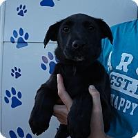 Adopt A Pet :: Magna - Oviedo, FL