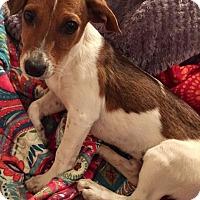 Adopt A Pet :: Dusty - Las Vegas, NV