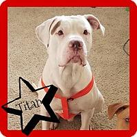 Adopt A Pet :: Titan-ADOPTION PENDING - Des Moines, IA