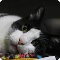 Adopt A Pet :: Noosh - Friendswood, TX