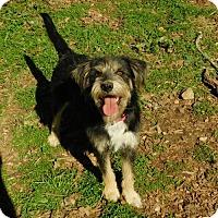 Adopt A Pet :: Lulu Pearl - Cedar Creek, TX