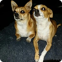 Adopt A Pet :: Boomer - Surrey, BC