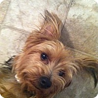 Adopt A Pet :: Leo - Goodyear, AZ