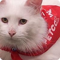 Adopt A Pet :: Lemon Drop - Chandler, AZ