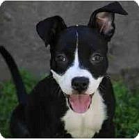 Adopt A Pet :: Ella - DFW, TX