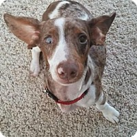 Adopt A Pet :: LUCKY LENNY - Portland, OR