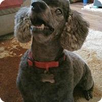 Adopt A Pet :: PUCK - Melbourne, FL
