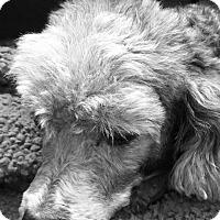Adopt A Pet :: Lew - Homer, NY
