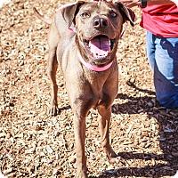 Adopt A Pet :: NELSON - Phoenix, AZ
