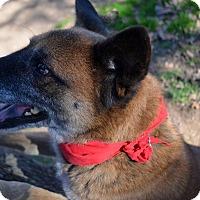 Adopt A Pet :: Gooby - Burleson, TX