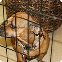 Adopt A Pet :: Kiah - Aurora, CO