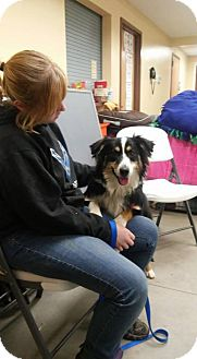 Australian Shepherd Dog for adoption in Middletown, Ohio - Winnie 2