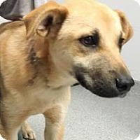 Adopt A Pet :: Bum - Lincolnton, NC