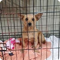 Adopt A Pet :: MACY - Lubbock, TX