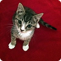 Adopt A Pet :: Peter - Monroe, NC