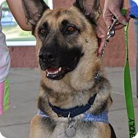 Adopt A Pet :: Morgan - Greensboro, NC
