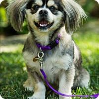 Adopt A Pet :: Hudson - West LA, CA