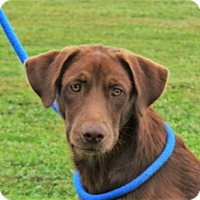 Adopt A Pet :: **IVAN** MEET AUG 27TH! - Mukwonago, WI