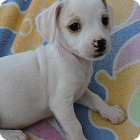 Adopt A Pet :: Flower - La Habra Heights, CA